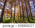 東京都 水元公園 紅葉シーズン 43669227