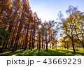 東京都 水元公園 紅葉シーズン 43669229