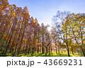 東京都 水元公園 紅葉シーズン 43669231