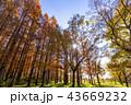 東京都 水元公園 紅葉シーズン 43669232