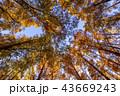 東京都 水元公園 紅葉シーズン 43669243