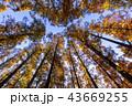 東京都 水元公園 紅葉シーズン 43669255