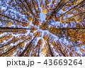 東京都 水元公園 紅葉シーズン 43669264