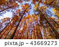 東京都 水元公園 紅葉シーズン 43669273