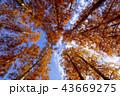 東京都 水元公園 紅葉シーズン 43669275