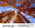 東京都 水元公園 紅葉シーズン 43669277