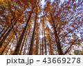 東京都 水元公園 紅葉シーズン 43669278