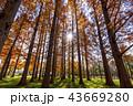 東京都 水元公園 紅葉シーズン 43669280