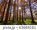 東京都 水元公園 紅葉シーズン 43669281
