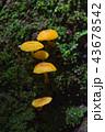 背景 植物 苔の写真 43678542
