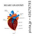 ハート ハートマーク 心臓のイラスト 43679793