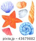 ひとで ヒトデ 海星のイラスト 43679882