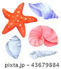 ひとで ヒトデ 海星のイラスト 43679884