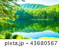 新緑・エコイメージ《長野県・御射鹿池》 43680567