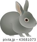 43681073