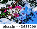 自然の美しさ 43683299