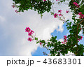 空に描く 43683301