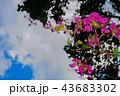 綺麗な花 43683302