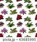 花 お花 フラワーのイラスト 43685995