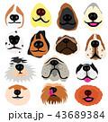 犬の鼻いろいろセット 43689384