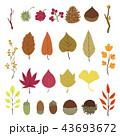 秋 紅葉 葉のイラスト 43693672