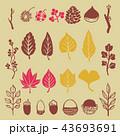 秋 紅葉 葉のイラスト 43693691