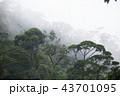 ジャングル 密林 熱帯雨林の写真 43701095
