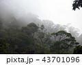 ジャングル 密林 熱帯雨林の写真 43701096