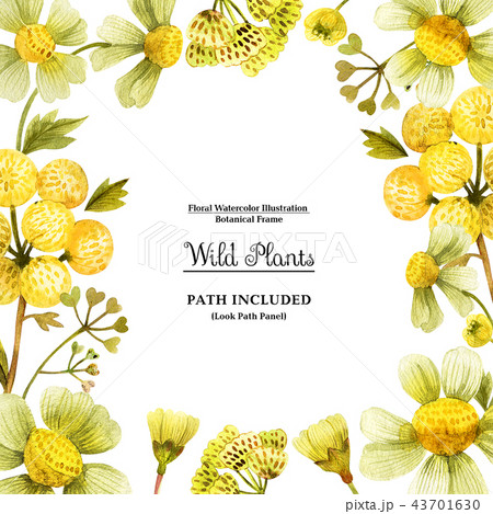 Yellow wild plants square frame for decoration 43701630