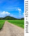 水田 田んぼ 田舎道の写真 43703331