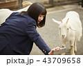 動物園で遊ぶ女子高生 43709658