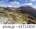 浅間山 紅葉 冠雪の写真 43713830