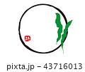 こんぶ 水彩画 43716013