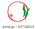こんぶ 水彩画 43716014