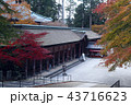 11月 紅葉の比叡山延暦寺の根本中堂-滋賀の秋- 43716623