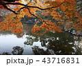 12月 紅葉の円山公園-京都の秋- 43716831