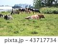 牛 43717734