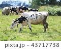 牛 43717738