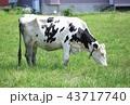 牛 43717740