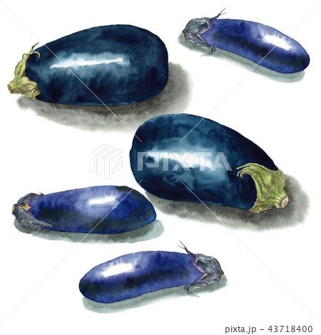 水彩で描いた茄子と米茄子 43718400