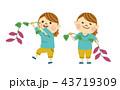 芋掘り 女性 さつまいものイラスト 43719309