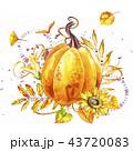 かぼちゃ カボチャ 南瓜のイラスト 43720083