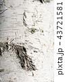 白樺の樹皮 43721581