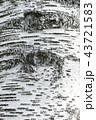 白樺の樹皮 43721583