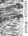 白樺の樹皮 43721584