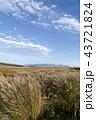秋の空とススキの草原 43721824