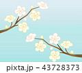 梅 花 ベクターのイラスト 43728373