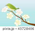 梅6 梅と鳥 43728406