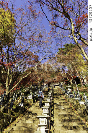 神奈川 丹沢 大山寺の紅葉 43729257