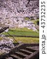 桜 花 植物の写真 43732235